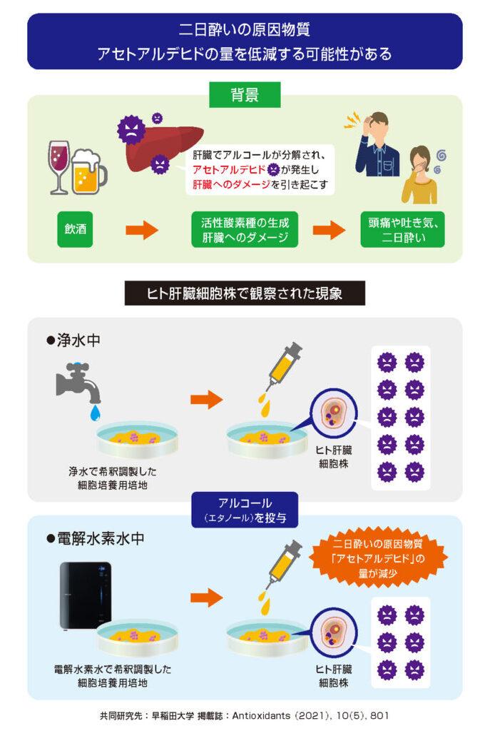 「電解水素水」がアルコールによる肝細胞傷害を軽減するメカニズムを解明(科学誌「Antioxidants」に掲載)